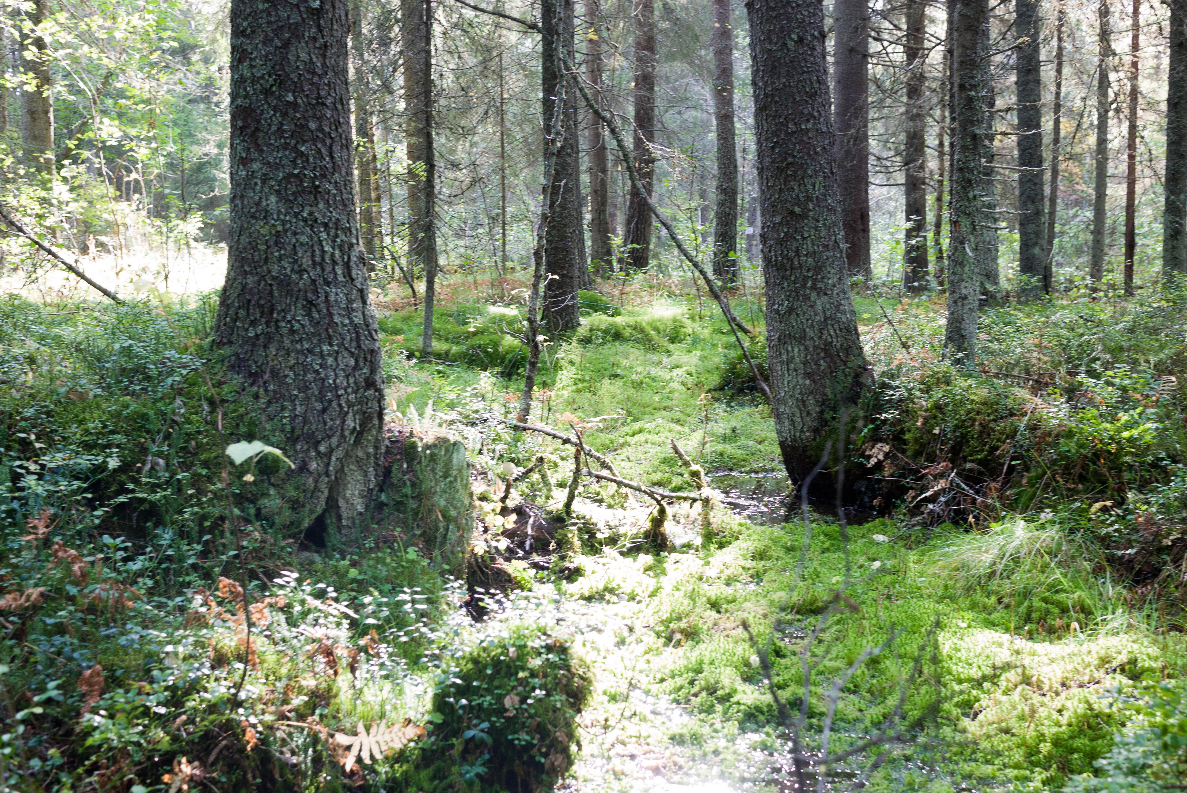 värdering skogsfastighet